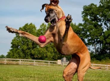 Мифы о больших собак