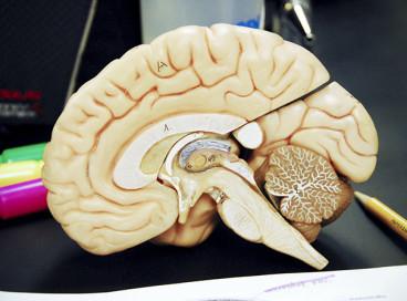 33 необычных явления, происходящих у нас в голове