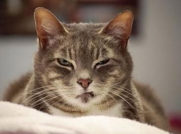 25 кошек, планирующих коварное убийство своих хозяев