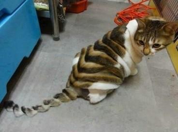 Безумные стрижки домашних животных