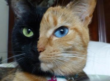 Кошки, на которых природа не отдохнула
