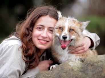 Тодди – лиса с повадками собаки