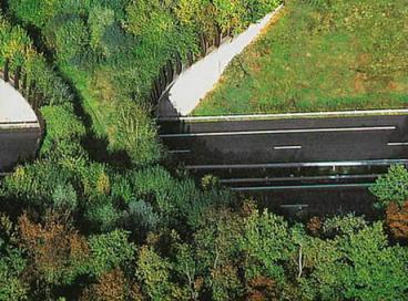 Мосты для диких животных над оживленными трассами в разных точках мира