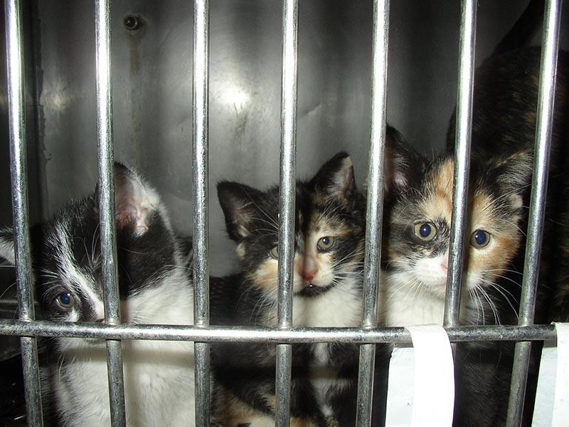 В Китае ежегодно употребляют в пищу мясо 4 000 000 кошек.