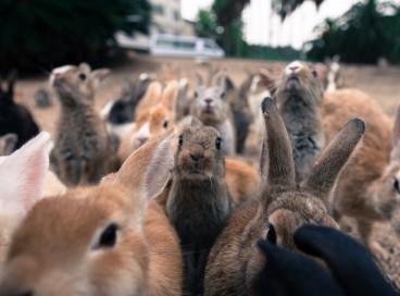 Настоящий рай для кроликов