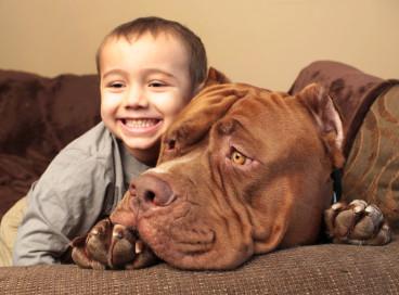 Халк – один из огромнейших псов во всем мире.