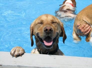 Чему человека могут научить собаки