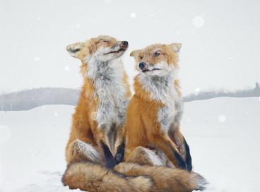 Фото животных от Саймена Джохана