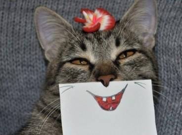 Когда скучно, но есть кот
