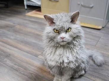 Суровый кот Альберт.