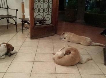 Преданность до конца: собаки пришли проститься с умершей женщиной, которая подкармливала их.